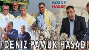 VALİ DENİZ PAMUK HASADINDA