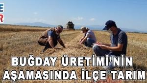 Buğday Üretiminin Her Aşamasında İlçe Tarım Var!