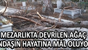 Mezarlıkta Devrilen Ağaç Çalışanın Hayatına Mâl Oluyordu !