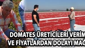 Domates Üreticileri Verimden ve Fiyatlardan Dolayı Mağdur !