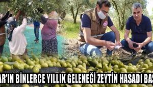 Akhisar'ın Binlerce Yıllık Geleneği Zeytin Hasadı Başladı!