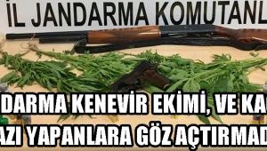 JANDARMA KENEVİR EKİMİ, VE KAÇAK KAZI YAPANLARA GÖZ AÇTIRMADI !