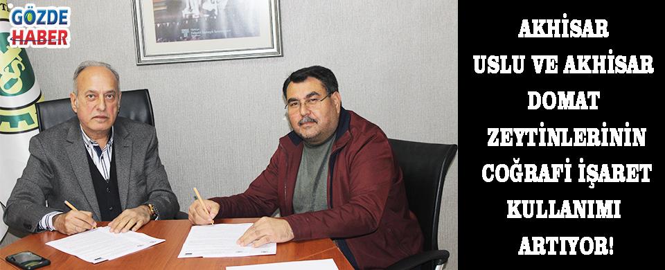 Akhisar Uslu ve Akhisar Domat Zeytinlerinin Coğrafi İşaret Kullanımı Artıyor!