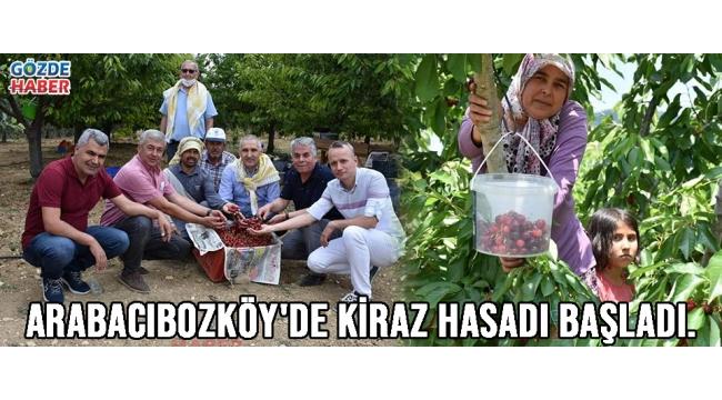 Arabacıbozköy'de Kiraz Hasadı Başladı.!