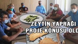 Zeytin Yaprağı Proje Konusu Oldu!
