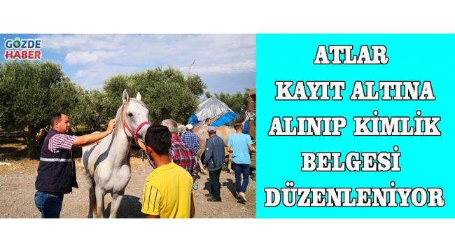 Atlar Kayıt Altına Alınıp Kimlik Belgesi Düzenleniyor!
