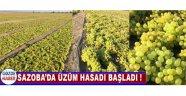 Sazoba'da Üzüm Hasadı Başladı !