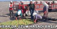 Akhisar'da Üzüm Hasadı Başladı !