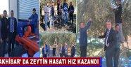 Akhisar' Da Zeytin Hasatı Hız Kazandı
